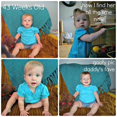 43 week Collage