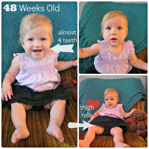 48 week Collage